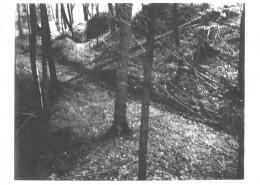DER PLÖTZLICHE REICHTUM DER ARMEN LEUTE VON KOMBACH // Vorbereitungsmaterial / Motivsuche 2