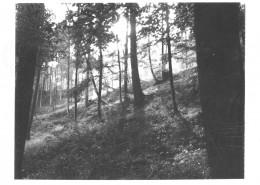 DER PLÖTZLICHE REICHTUM DER ARMEN LEUTE VON KOMBACH // Vorbereitungsmaterial / Motivsuche 3