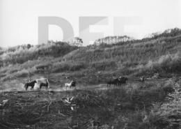MICHAEL KOHLHAAS - DER REBELL // Szenenfoto 56